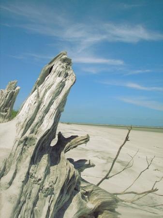 Sapelo Island Beach Rentals