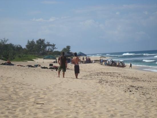 Waialua, HI: Lost