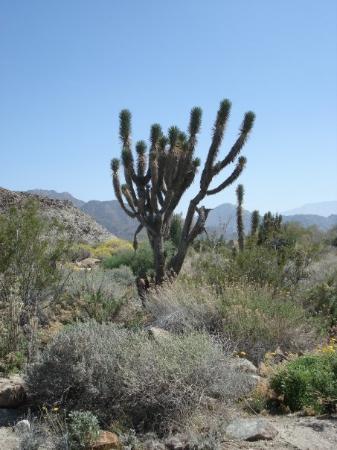 Living Desert Zoo & Gardens: Living Desert Zoo and Gardens, Palm Desert, California
