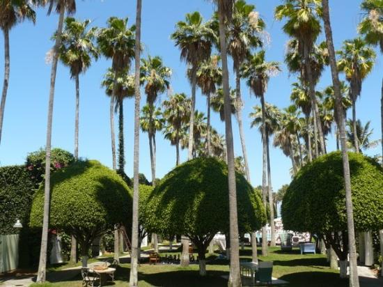 Delano South Beach Hotel: The gardens at the Delano hotel, South Beach
