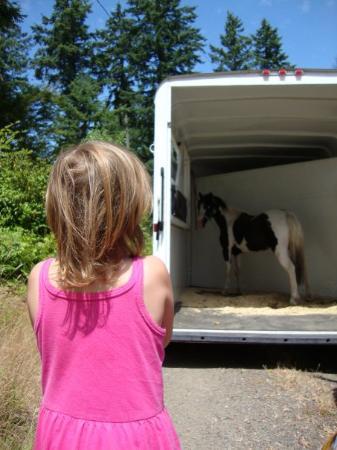 Fox Island, WA: Gracie's pony arrives from Idaho!