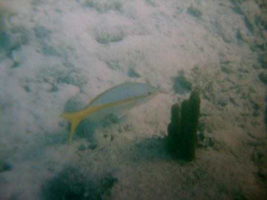 South Water Caye, Belize: I want to go back!