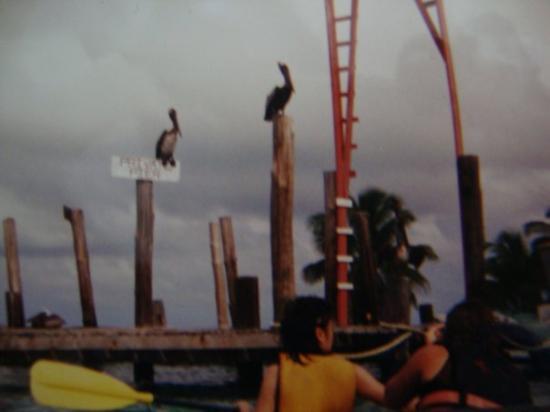 South Water Caye, Belize: kayaking around