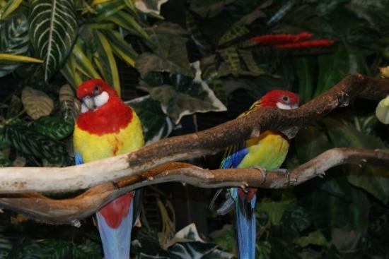 Zoo Boise: Pretty parrots