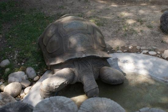 Zoo Boise: giant turtle