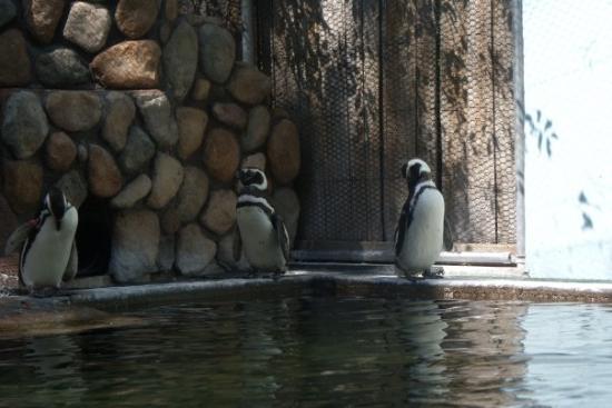 Zoo Boise: Penguins... of madagascar?