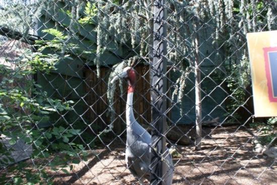 Zoo Boise: Wierd bird thing