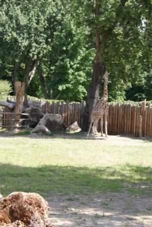 Zoo Boise: Giraffe *reach... just a little farther.....*