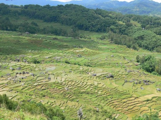 Sulawesi, Indonezja: ryzove terasy