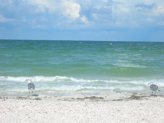 Coconut Inn: The Beach