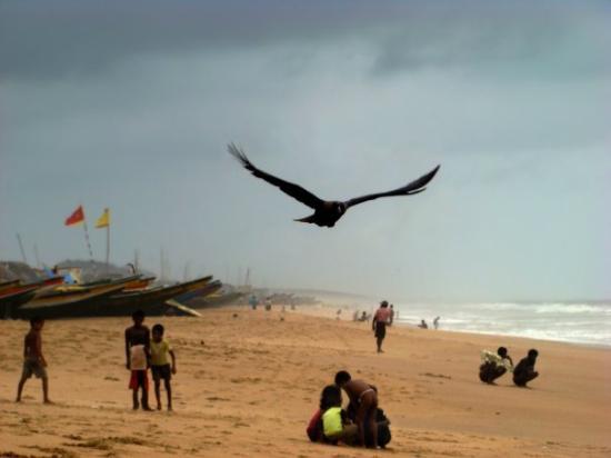 Playa de Puri  ( Estado de Orissa )