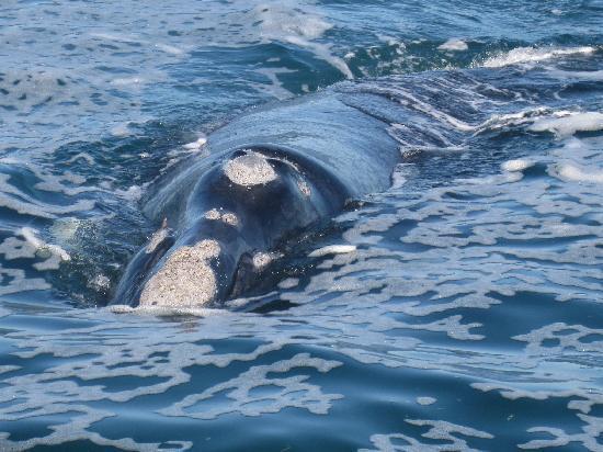 classicalView: Wale vor der südafrikanischen Küste