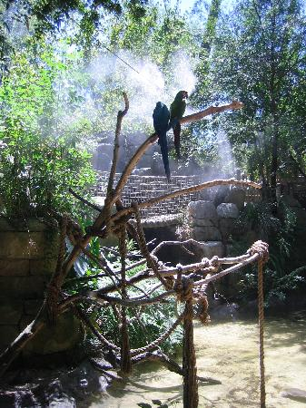 Fresno Chaffee Zoo : PARROTS