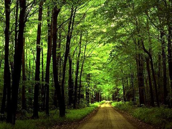 Noor, Irán: Mazandaran woods