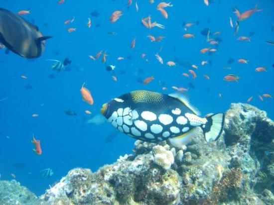 Ellaidhoo, Malediven