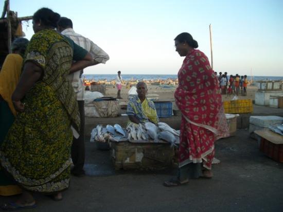 Pondicherry india fish market picture of pondicherry for Cherry street fish market