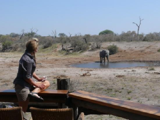 Savute Safari Lodge: watching the ellies