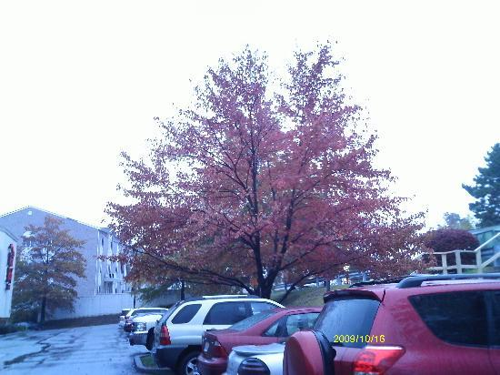 Red Roof PLUS+ Pittsburgh Monroeville: Parking Lot Outside Redroof Inn