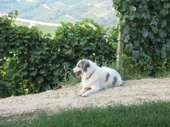 Cascina Bricchetto Langhe: Pepa the dog