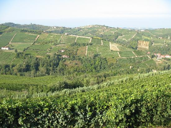 Cascina Bricchetto Langhe: view from the house