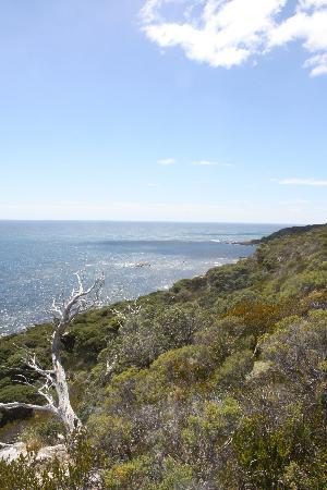 Cape Naturaliste - the view 2