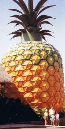 Big Pineapple Photo