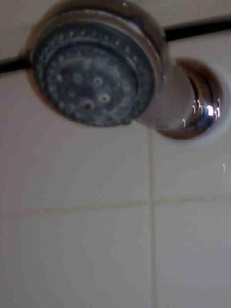 โรงแรมเวสต์บิวรี เมย์แฟร์: mould on the shower head!
