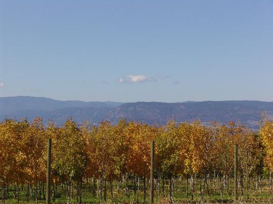 Grey Gables Bed & Breakfast: Okanagan Lake and Wine