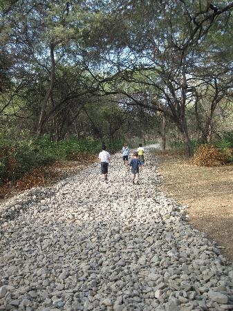 Vichayito Bungalows & Carpas by Aranwa: Bosque seco
