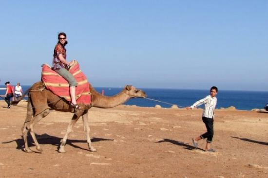 Tangier Morocco North Africa Camel Rides Picture Of