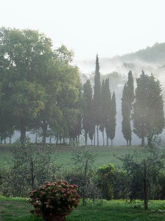 Villa Campestri Olive Oil Resort: Early morning balcony view