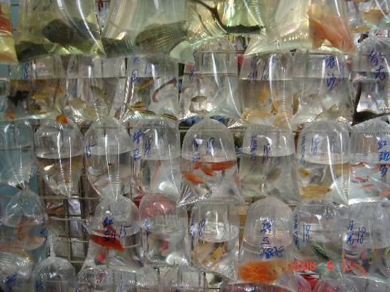 Hong kong fish market picture of hong kong china for Chinese fish market near me