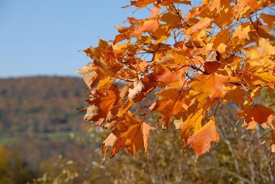 The Inn at Round Barn Farm: late fall foliage