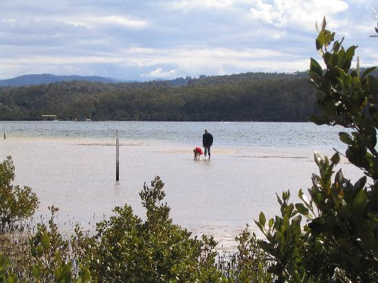 Merimbula, Australia: Catching sand crabs_Top Lake