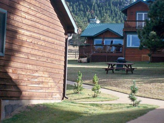 Mountain Shadows Resort Photo