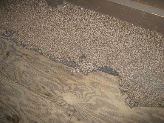 Shore Acres Lodge: Patio carpet rotting, wood rotting, cabin rotting . . .