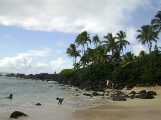 Haleiwa Hi On Turtle Beach North S