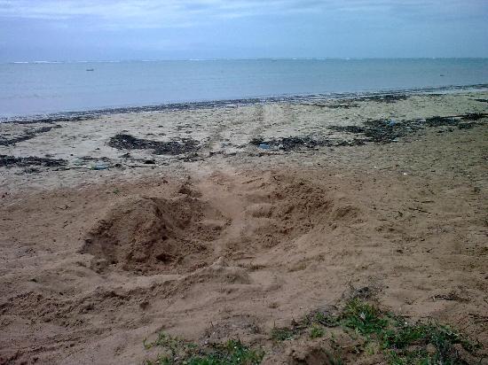 22 october 09, Sea Turtles nesting in Jumba la Mtwana