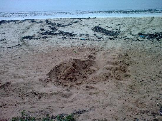 Jumba La Mtwana 22 October 09, Sea turtle nesting