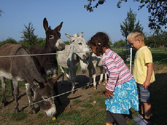 Dorfkrug: Am Ende des Stellplatzes warten Esel auf Futter!