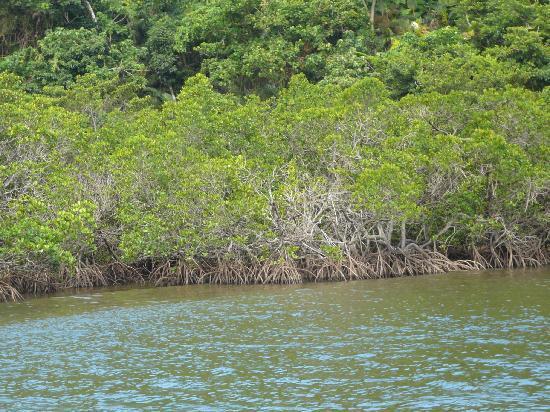 Iriomote Island - Picture of Taketomicho Iriomote-jima, Yaeyama-gun - TripAdv...