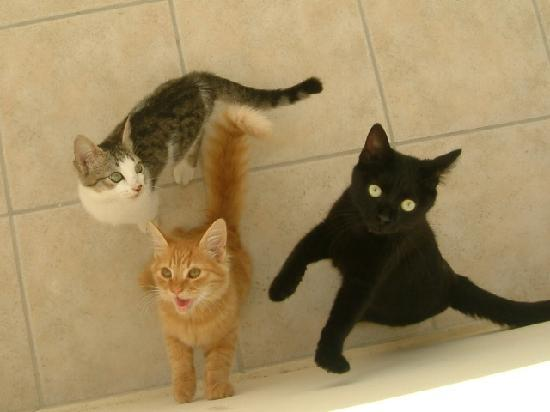 Windmill Bay Aparthotel : Three cats that love hanging around the Hotel, if you have room 304 the cats seem to like that r