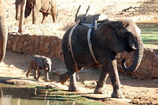Kwena Chalets - Sun City: Elephant safari 1.