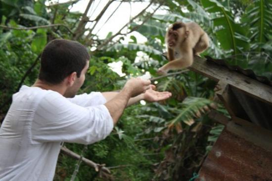 Beaufort District, Malaysia: Försöker blir kompis med apan =)