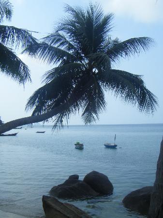 Sunset Cove Resort: Vista desde el recinto del hotel