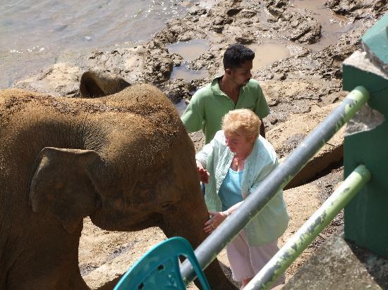 Shangri-Lanka Villa: Oh, you beautiful boy