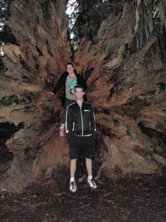 Redwood National Park: The roots of a Redwood