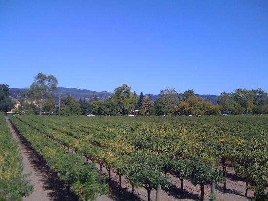 Salvestrin Winery : The stunning view from the Salvestrin tasting room