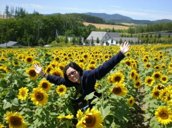 Kamikawa-cho Japan  city pictures gallery : Sunflowers farm at Flowerland Kamifurano a Facebook Member, Oct 2009