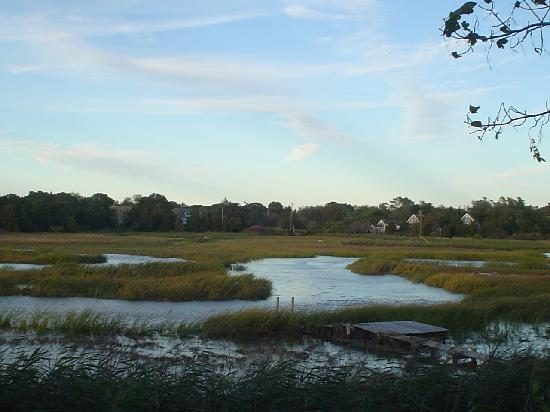 Hot Chocolate Sparrow: Tide coming in-Rock Harbor Marsh